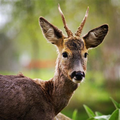 man allegedly  dead deer  fake car crashes
