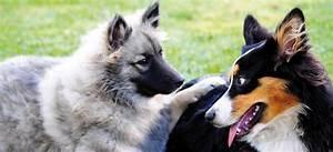 Lebenswoche Berechnen : hundsvertr glich tierische tipps ~ Themetempest.com Abrechnung