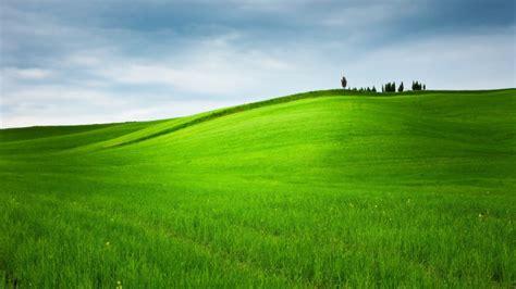 wallpaper trees landscape hill nature sky field