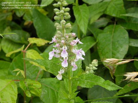 Plant Identification Closed Indiana Roadside Plants Pt 3 5 By Ksmaier
