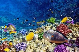 15 Pics Of Amazing Coral Reefs And Fishes ...