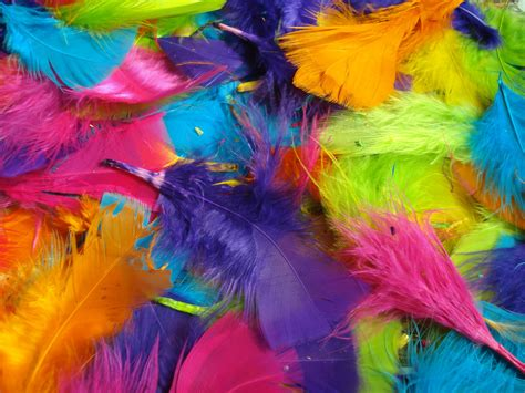 colored feathers bright colored feathers by nelliesnicsnclips on etsy