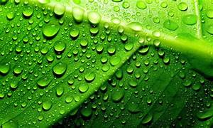 Green Leaf With Water Droplets Hd Wallpaper : Wallpapers13.com