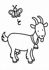 Goat Coloring Sheet Bee Printable Kid Parentune Preschoolers Worksheets Friend Forkids sketch template