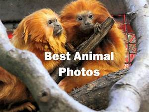 Best Animal Photos Photo Album By Glenn Campbell