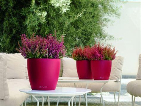 plante pour pot exterieur plantes en pot pour exterieur 28 images plantes d ext 233 rieur en pot sans entretien