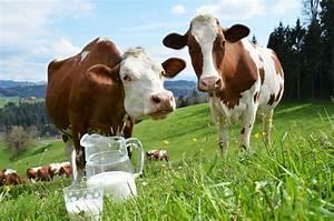 We U0026 39 Re Drinking Less Cow U0026 39 S Milk  More Plant Milk