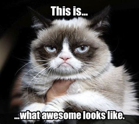 Grumpy Cat Coma Meme - 1384 best images about grumpy cat on pinterest gift quotes angry cat and grumpy cat quotes