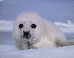 Cooling Off With Cute Arctic Animals | Cuteness Overflow