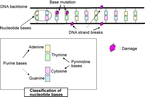Success In Selective Induction Of Dna Damage By