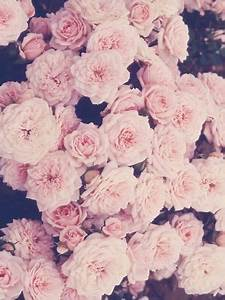 Roses vintage iphone wallpaper | Ipod and iphone things ...