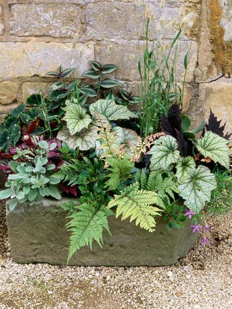 container gardens on container gardening