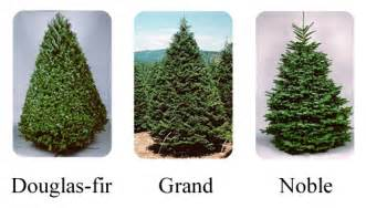 Best Type Of Christmas Tree For Allergies by Backyard Landscape Christmas Tree Types The Types And