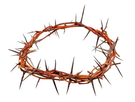 crown  thorns clipart   cliparts  images