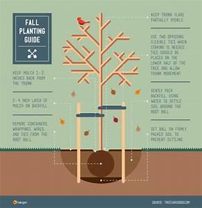 Fall Tree Planting Guide
