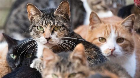 australian towns introducing cat curfews