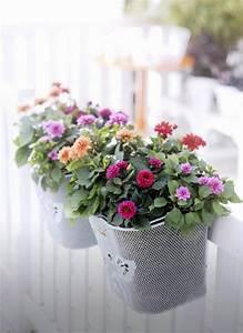 Blumenkästen Bepflanzen Sonnig : 55 balkonbepflanzung ideen tolle blumen f r balkon arrangieren ~ Frokenaadalensverden.com Haus und Dekorationen