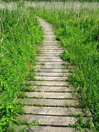 blog nature trail templates vertical view of a wooden nature trail path stock photo