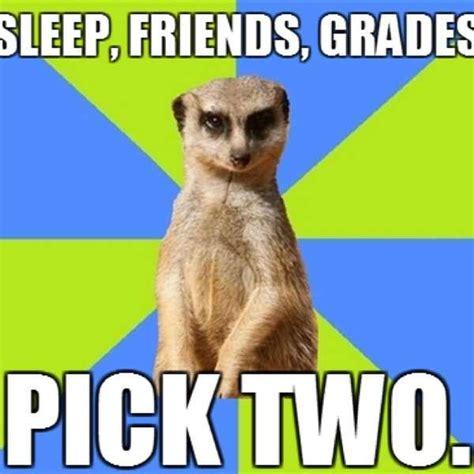 College Sleep Meme - 39 best graduation images on pinterest graduation ideas nursing schools and graduation