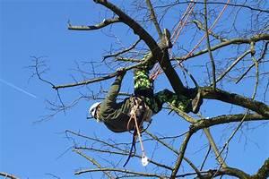 Bäume Verschneiden Obstbäume : b ume schneiden ~ Lizthompson.info Haus und Dekorationen