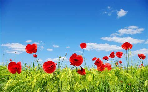 telecharger la meteo sur mon bureau gratuit fonds d 39 écran nature les fleurs arrivent en grand format