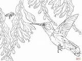 Hummingbird Coloring Bee Pages Hummingbirds Printable Flower Drawing Adult Supercoloring Colouring Sheets Colorings Animals Colors Dot Getdrawings Paper Books Printables sketch template