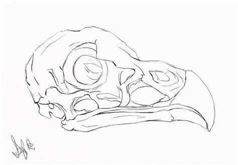 Bird Skull Study Nightspiritwing Deviantart
