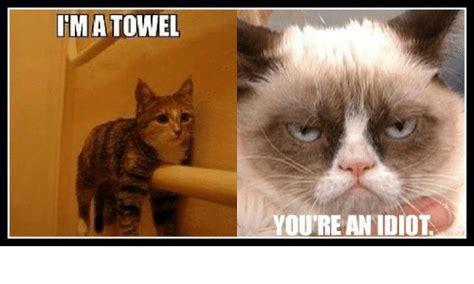 You Re A Towel Meme - fma towel you re an idiot grumpy cat meme on sizzle