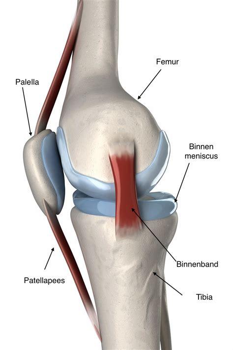 Pijn in lies bovenbeen en knie