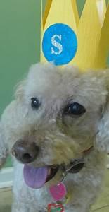Charlestonlivingcom homepage for Charleston dog house
