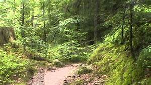 Randonn U00e9e Dans Les Vosges  For U00eat De Retournemer