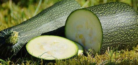 Kann Zucchini Roh Essen by Zucchini Roh Essen Vorteile Und M 246 Gliche Gefahren Utopia De