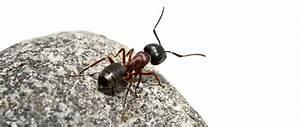 Wie Bekämpfe Ich Ameisen : was wir von ameisen lernen k nnen energie blog ~ Whattoseeinmadrid.com Haus und Dekorationen