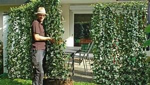 Immergrüne Pflanzen Als Sichtschutz : garten pflanzen sichtschutz ~ Michelbontemps.com Haus und Dekorationen