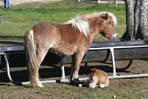 Miniature Horse Farm - Picture of Brenham, Texas - TripAdvisor