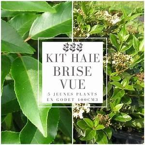 Arbuste Brise Vue : kit haie brise vue pour balcon ou terrasse arbustes pour ~ Preciouscoupons.com Idées de Décoration
