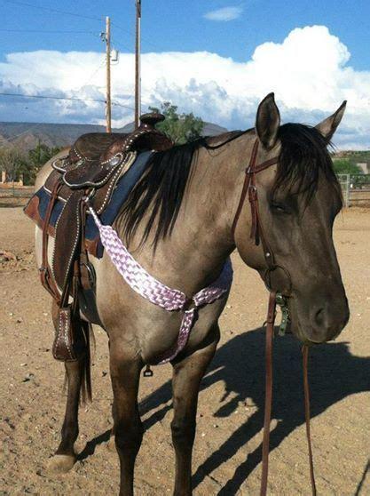 mule tape tack horse horses sphotos fbcdn akamaihd crafts