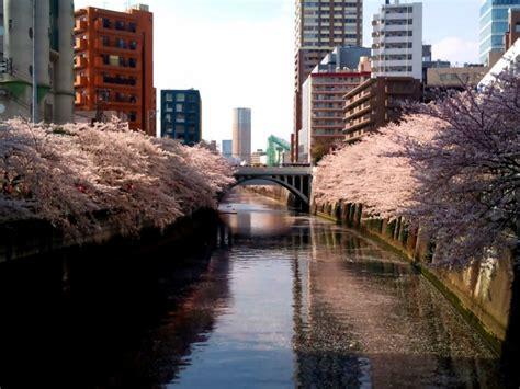 meguro river tokyo japan world  travel