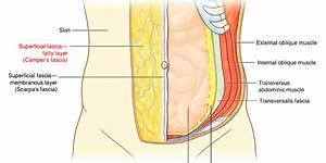 Abdominal Anatomy Part One Mcq