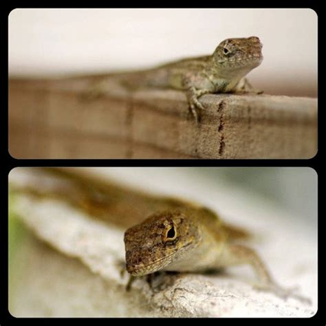 126 Best Images About Lizards On Pinterest Colorful
