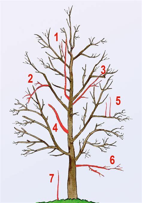 obstbaumschnitt gemuesebeet pinterest obstbaumschnitt