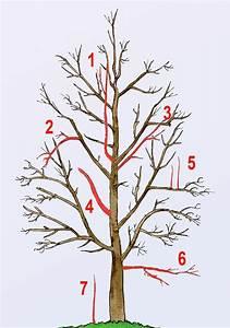 Apfelbaum Wann Schneiden : obstbaumschnitt garten deko pinterest garden vegetable garden and bonsai ~ Frokenaadalensverden.com Haus und Dekorationen