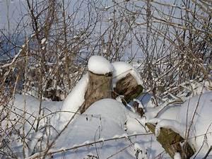 Schmetterlinge überwintern Helfen : insekten im winter wie und wo berleben sie ~ Frokenaadalensverden.com Haus und Dekorationen