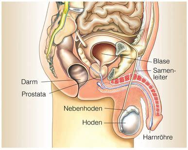 beim ejakulieren schmerzen im hoden