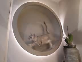 cat wheel diy cat wheel and also designlight