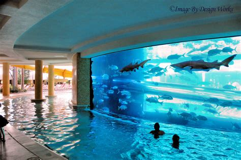 Hotels With Balconies New Orleans by Shark Tank Pool The Golden Nugget In Downtown Las
