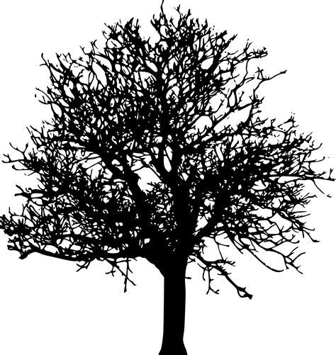 simple black tree silhouette www pixshark com images