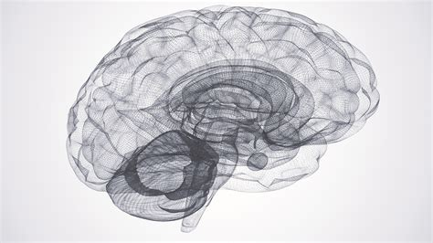 Ap Psychology Brain Song