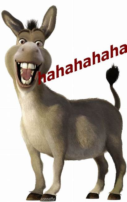 Gifs Animal Humour Mdr Sonnette Dreamies Centerblog