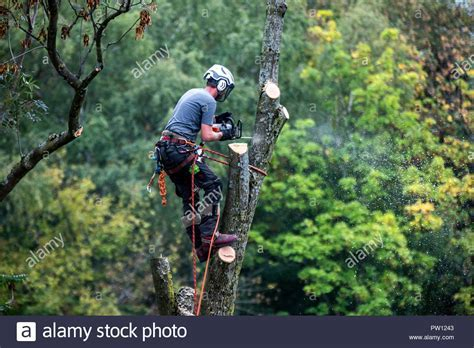 Chainsaw Tree Stock Photos & Chainsaw Tree Stock Images